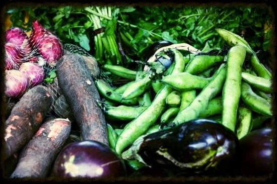 Organic Selection b - russavia - wikimedia