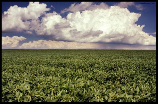 Soybean Crop - Barbara Eckstein - Flickr - w1080 - border
